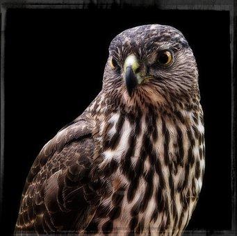 Falcon, Frame, Wild, Bird, Feathered, Nature