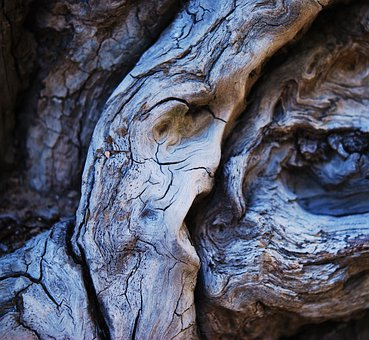 Wood, Faces In Wood, Nature, Old, Dry Wood, Dead Tree