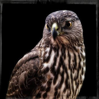 Falcon, Frame, Wild, Bird, Feathered, Nature