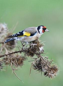 Bird, Carduelis, Flower