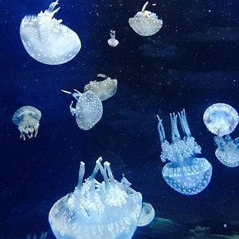 Jellyfish, Wobbling, Aquarium, Underwater, Animal