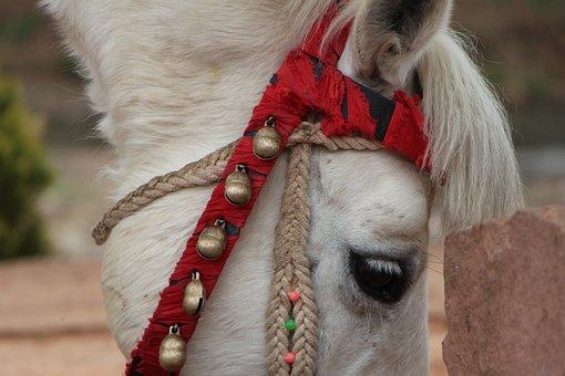 Animal, Horse, Detail, Cytochemistry Indexes, Eye