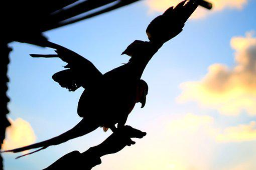 Bird, Nature, Fly, Silhouette, Wings