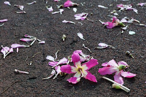 Flower, Hibiscus, Ground, Earth