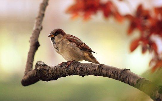 Sparrow, Tree, Branch, Bird