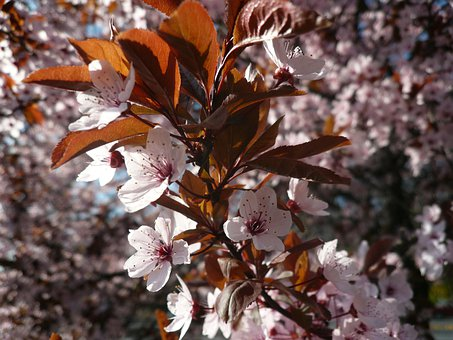 Spring, Flowering Tree, Spring Flowers, Sunshine