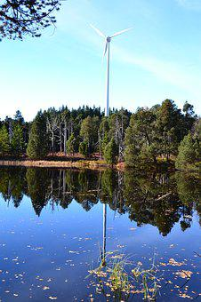 Moor, Blind Lake, Schonach, Black Forest, Nature, Trees