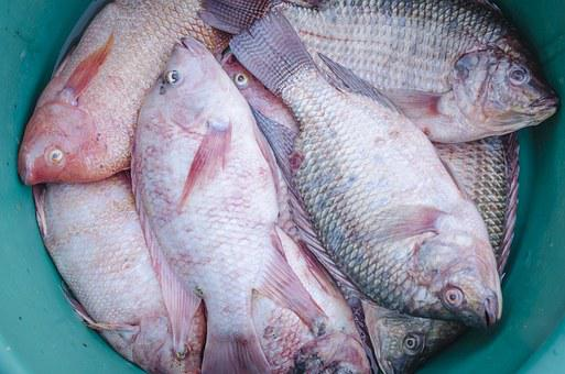 Fish, Fresh, Food, Healthy, Seafood, Sea, Market