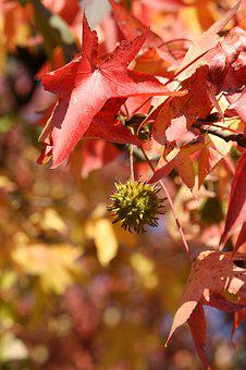 Leaf, Autumn, Red, Park, Nature, Green, Leaves, Foliage