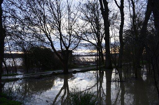 Edges Of Garonne, River, Wetlands, Swamp, Nature, Trees