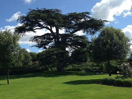 Tree, Garden, Lebanon