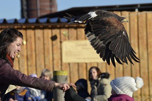 Adler, Bill, Raptor, Bird, Bird Of Prey, Portrait