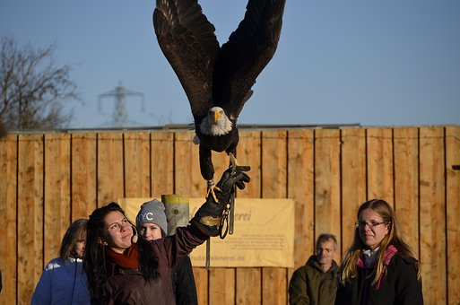 Adler, Bill, Raptor, Bird, Bird Of Prey, Portrait