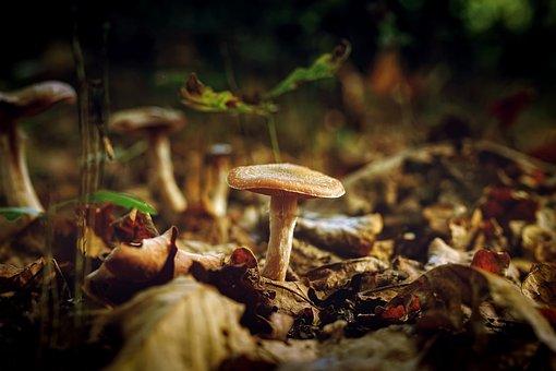 Mushroom, Fungus, Plant, Nature, Outdoors, Macro