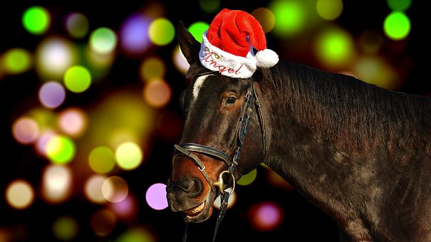 Horse, Christmas, Santa Hat, Funny, Laugh, Animal, Ride