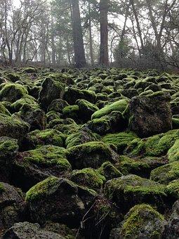 Moss, Wintergreen, Green Stones