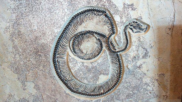 Fossil, Hose, Petrified, Fossil Butte National Monument