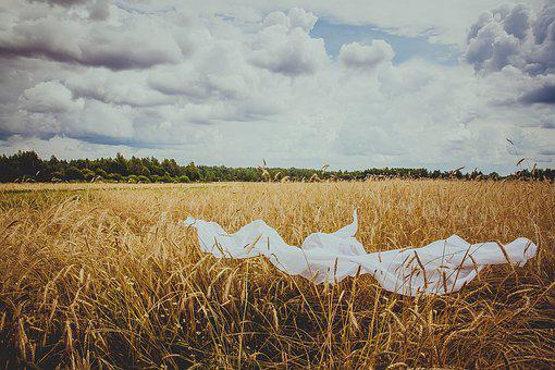 Field, Wheat, Nature, Cereals, Kolos, Agriculture
