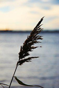 Lake, Water, Nature, Reed, Leaf, Wind, Cold, Autumn