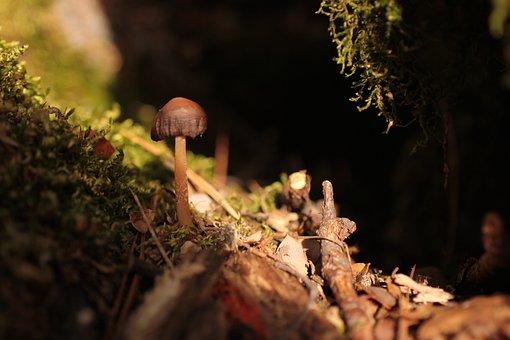Mushroom, Musk, Green, Autumn, Forest, Small, World