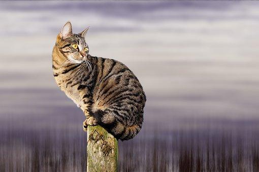 Cat, Wait, Sit, Animal, Pet, Predator, Cute