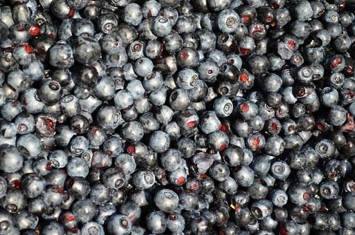 Blueberries, Fruit, Bilberry, Jagoda, Season, Mature