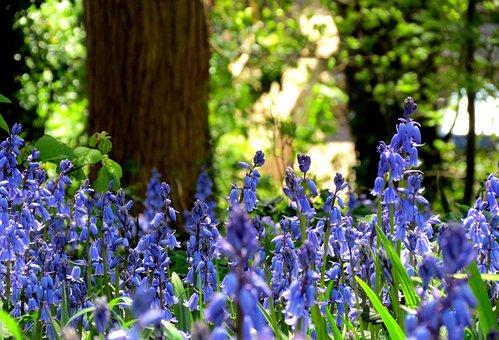 British, Flora, Green, Bluebell, Flowers, Blue, Purple