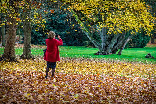 Autumn, Leaves, Photo, Nostalgia, Dried Leaves, Colors