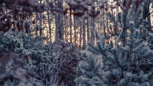 Winter, Forest, Cold, Sunset, Twilight, Snow, Fog