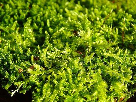 Moss, Filigree, Green, Nature, Overgrown