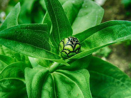 Green, Leaf, Close, Green Leaves, Garden, Foliage