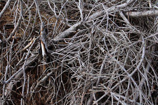 Twigs, Branches, Branch, Tree, Tree Branches