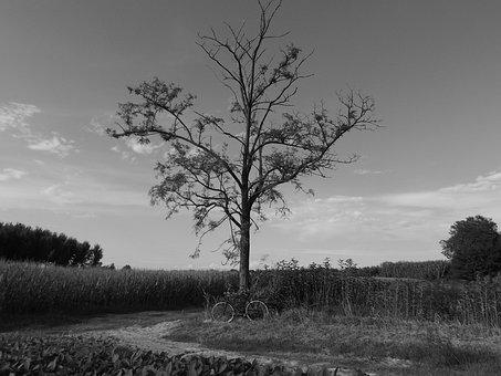 Landscape, White, Nero, Tree, Campaign