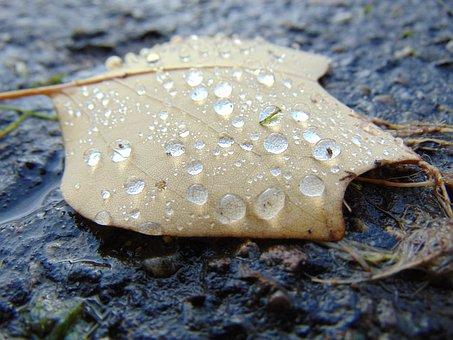 Autumn, Fall, Leaf, Water, Drops, Macro, Yellow, Brown