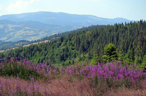 Flowers, The Apuseni Mountains, Mountain Flowers
