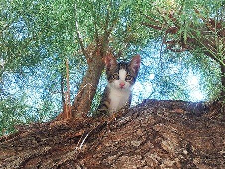 Cat, Kitten, Cute, Kittens, Cats, Kitty, Feline, Tree