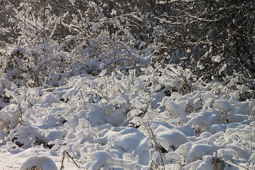 Branches, Cold, Forest, Frozen, Ice, Shining, Snow, Sun