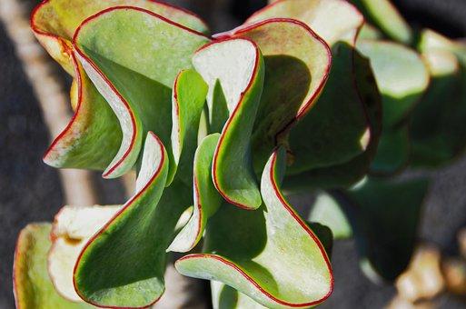 Lanzarote, Cactus Garden, Succulent, Red, Green, Garden