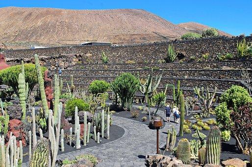 Lanzarote, Cactus Garden, Volcano, Walls, Spice, Nature