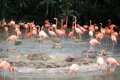 Flamingo, Pond, Singapore, Jurong, Bird, Park
