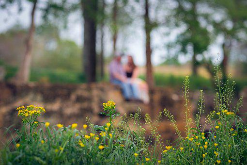 Couple, Engagement, Flower, Yellow, Plant, Sky, Tree