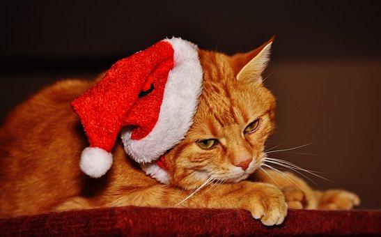 Cat, Red, Christmas, Santa Hat, Funny, Cute, Mackerel