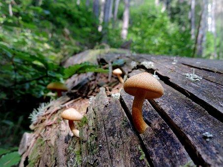 Nature, Mushroom, Autumn, Forest, Undergrowth, Log