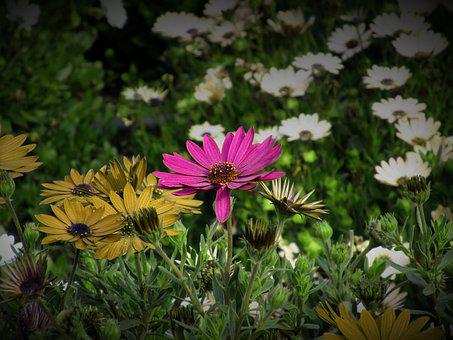 Flower, Flowers, Rosa, Flowery, Nature, Plants, Petal