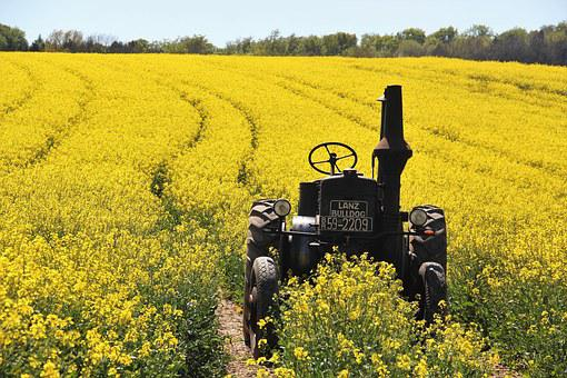Field Of Rapeseeds, Tractors, Age Lafountain
