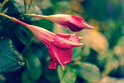 Nature, Garden, Flower, Plant, Blossom, Bloom, Summer