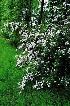 Flowers, White Flowers, Spring, Blossom, Nature