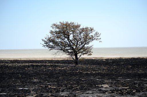 Namibia, Africa, Wildlife, Safari, Rural, Tree, Desert