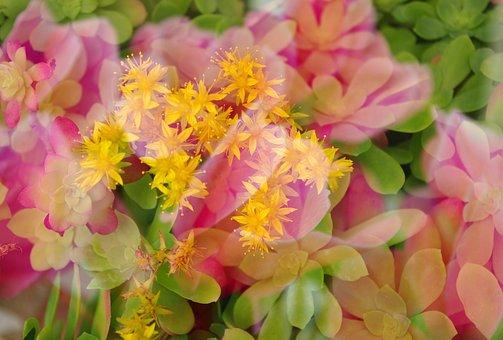 Multiple Exposure, Flowers, Warm Colors, Background