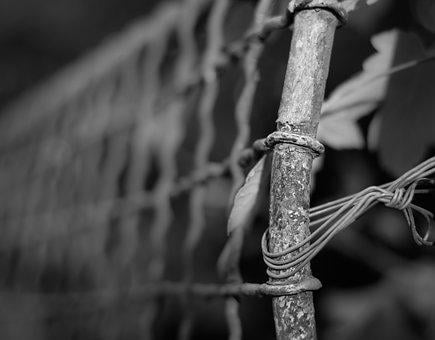 Fence, Wire, Depth Of Sharpness, Atmosphere